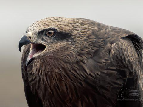 Fotoobraz ptaki drapiezne