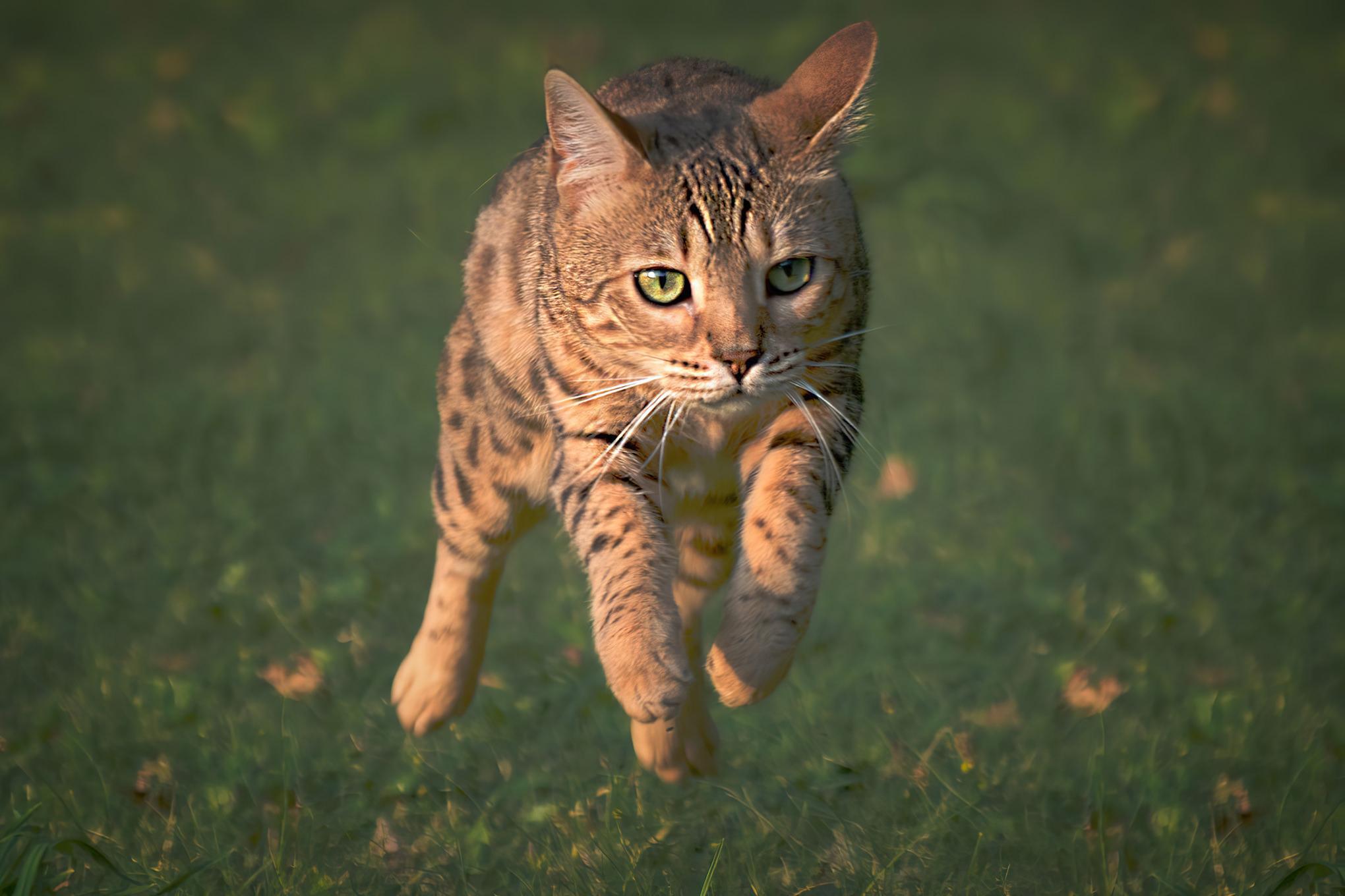 Fotografia kota w Pile