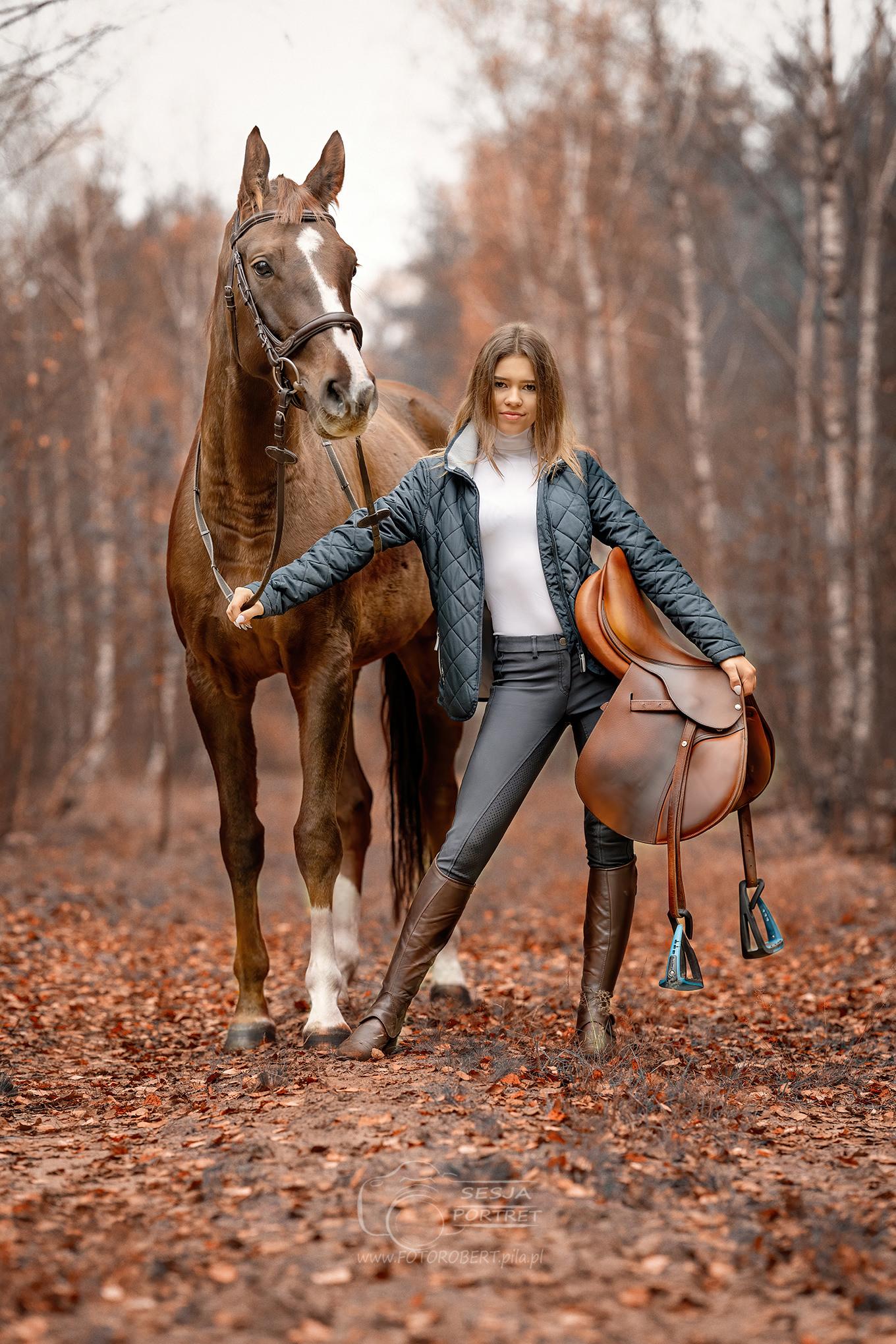 Sesja zdjęciowa konna Piła. sport jeździeckie. Koń sportowy