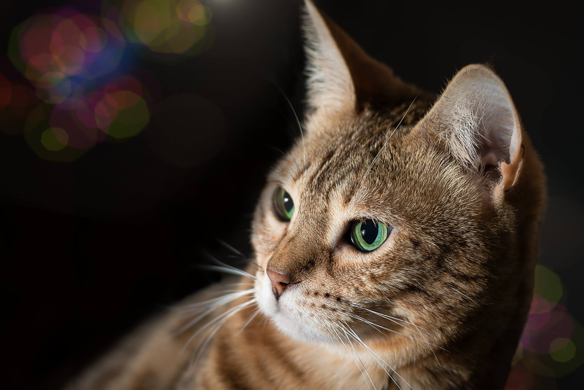 zdjęcie kota Piła