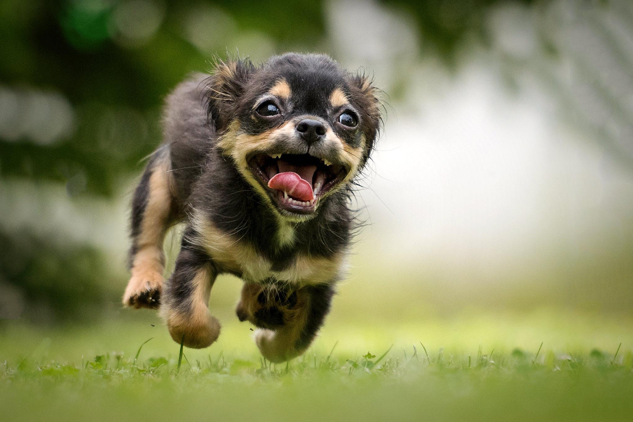 zdjęcie mojego psa