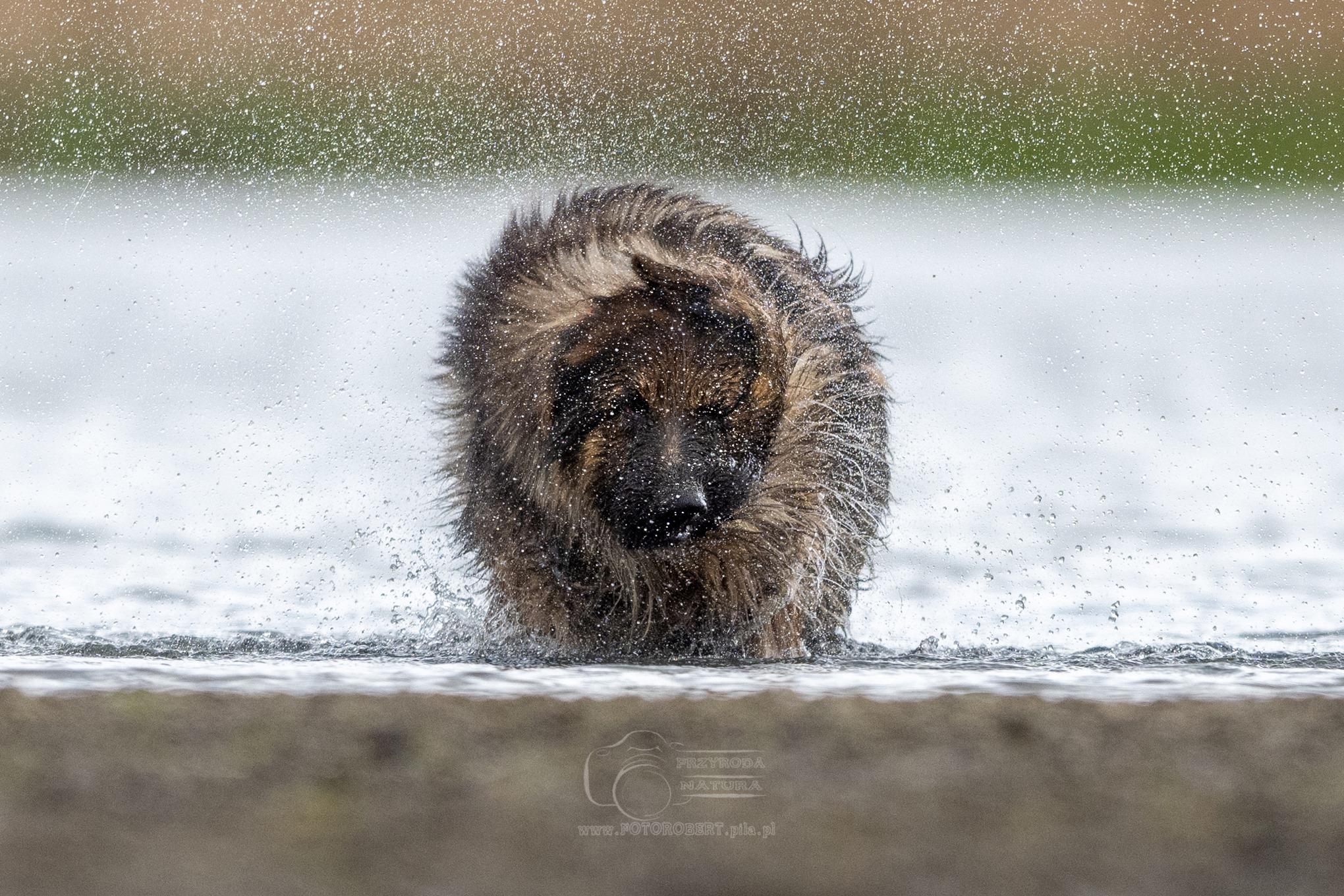 zdjęcie psa w Pile
